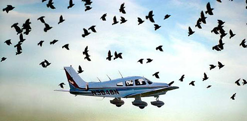 Bird strike – It could happen to you!